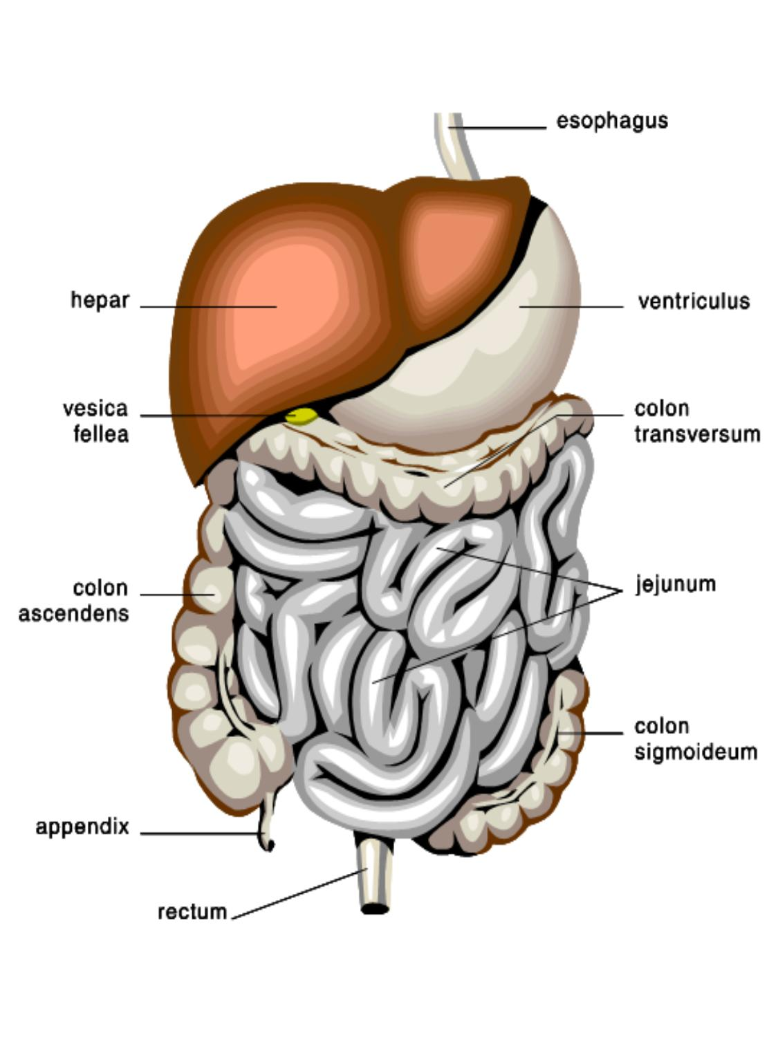 Natural Liver, Gallbladder and colon clease
