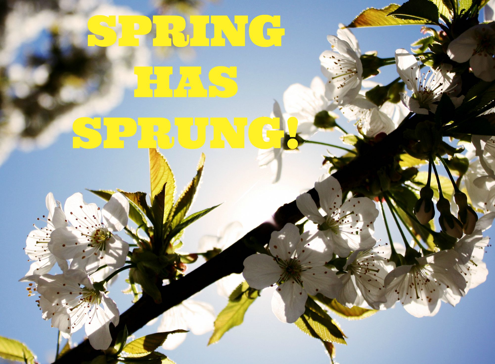 Spring health tips